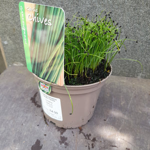 CHIVES GARLIC 1L