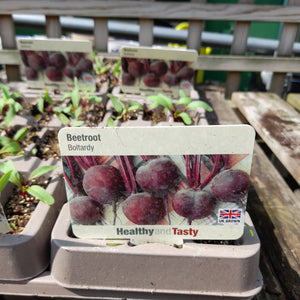 BEETROOT BOLTARDY 9 PACK
