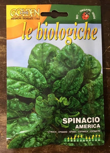 Spinach Espinaca - Biologica organic vegetable