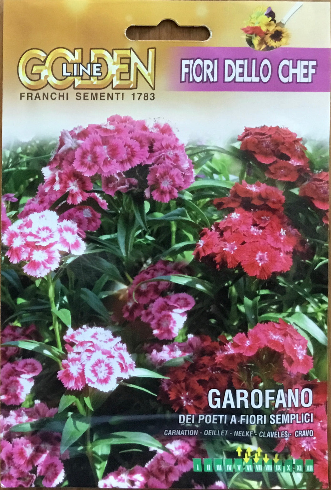 Sweet William - Carnation - Garofano