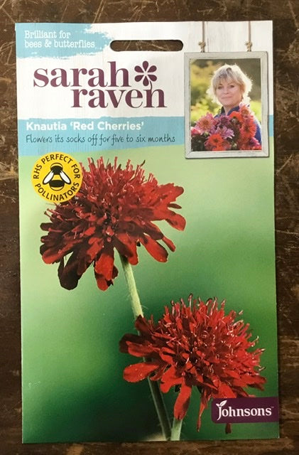 Knautia 'Red Cherries' - Sarah Ravens Flower Seeds