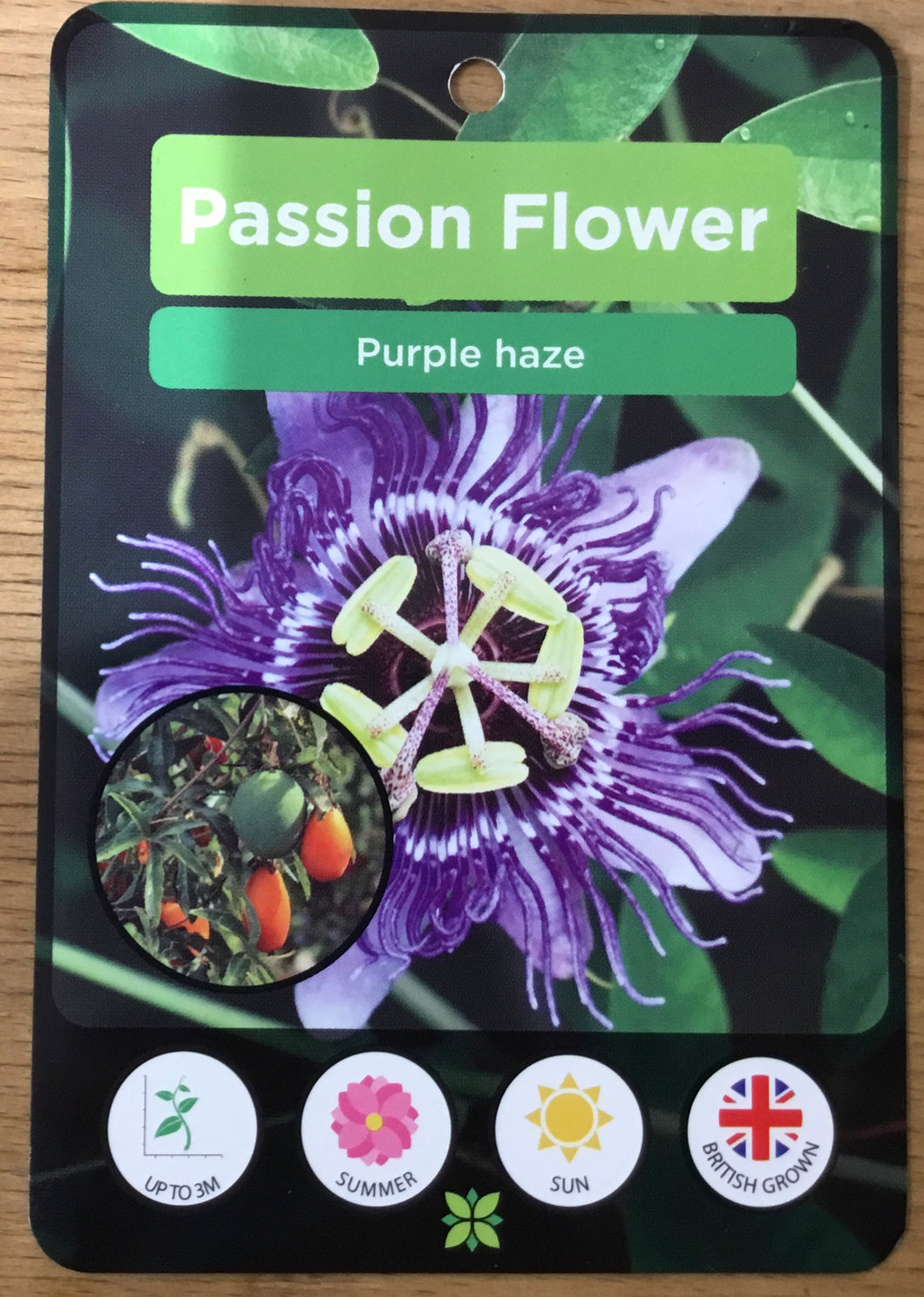 Passionflower: Passiflora Purple Haze