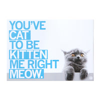 You've Cat To Be Kitten Me Right Meow Photo Postcard