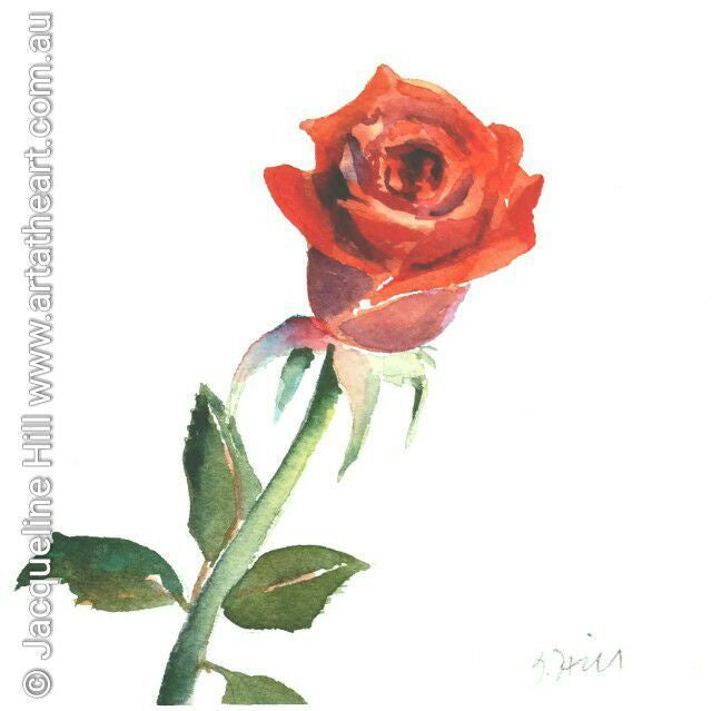 "DAE007 ""Love Rose"" Original Watercolour Painting apx 6x6""(15cm sq) by Jacqueline Hill"