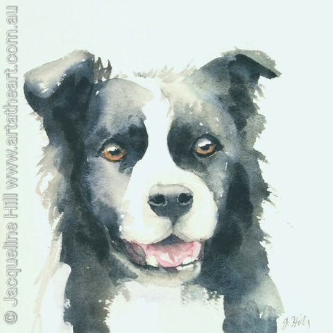"DA075 ""On the Alert (Border Collie)"" Original Watercolour Painting apx 6x6"" / 15cm sq by Jacqueline Hill"
