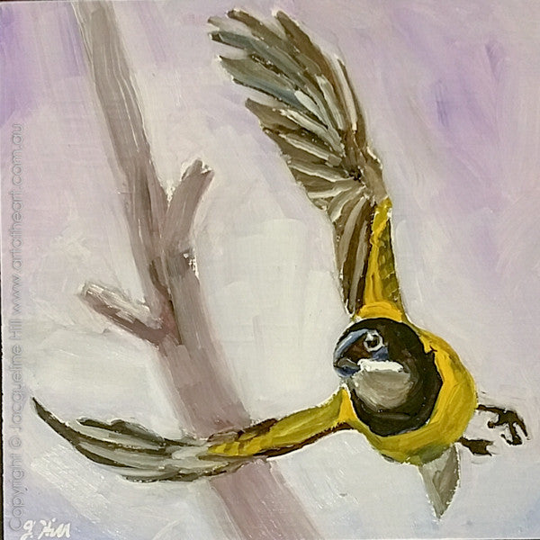 "DP310 ""Golden Whistler"" Original Oil on Panel Painting by Jacqueline Hill"