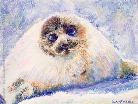 """Baby Harp Seal"" Original Pastel Painting by Jacqueline Hill [OR044]"
