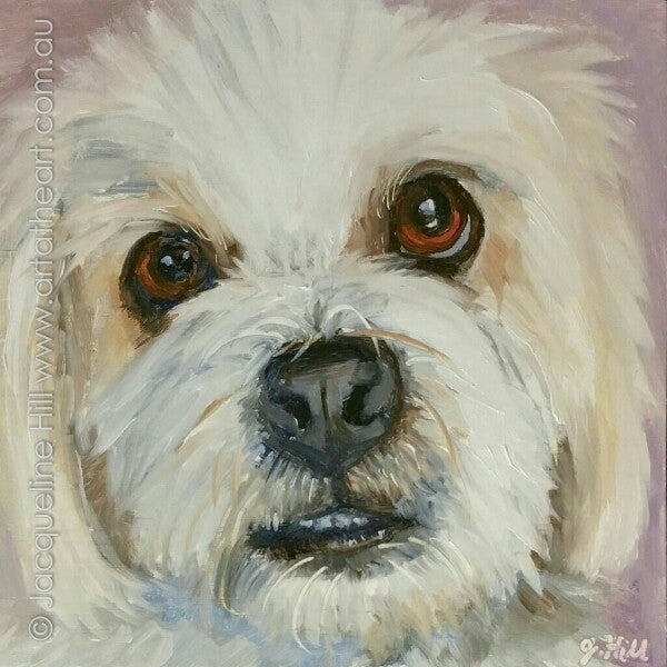 "DP349 ""Gentle Monty"" Original Oil on Panel Painting by Jacqueline Hill"