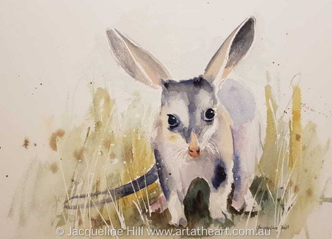 "DA143 ""Bilby II"" Original Watercolour Painting by Jacqueline Hill"