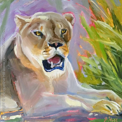 "DP328 ""Summer Heat"" (Lioness) Original Oil on Panel Painting by Jacqueline Hill"