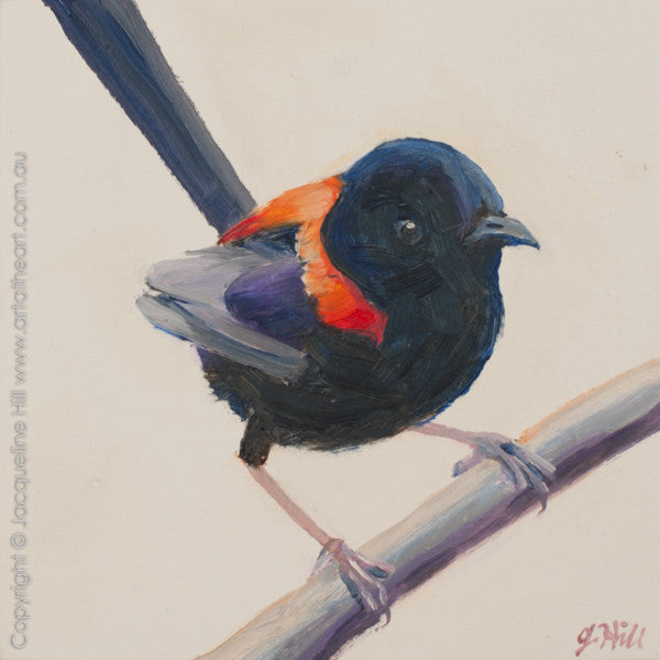 "DP235 ""Red-backed Fairy Wren IVo"" Original Oil on Panel Painting by Jacqueline Hill"
