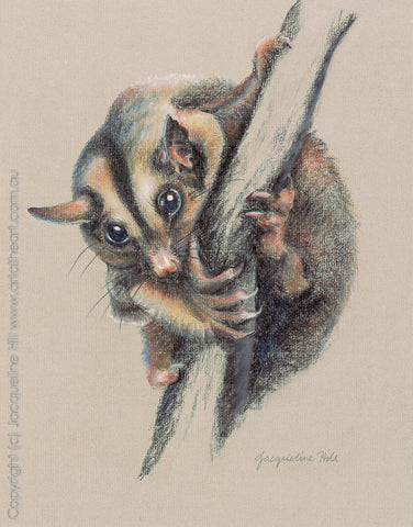 """Sugar Glider"" (pastel) by Jacqueline Hill, Limited Edition Fine Art Reproduction"