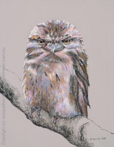 """Tawny Frogmouth"" (pastel) by Jacqueline Hill, Limited Edition Fine Art Reproduction"