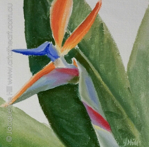 "DP342 ""Paradise Bird"" (Strelitzia) Original Oil on Canvas Panel Painting by Jacqueline Hill"