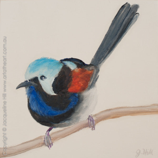 "DP239 ""Red-winged Fairy Wren"" Original Oil on Panel Painting by Jacqueline Hill"