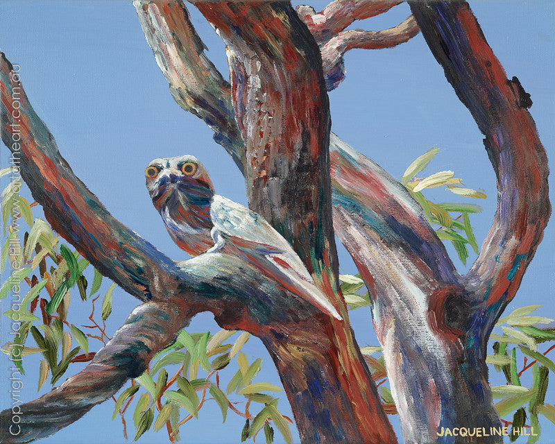 """Tawny Frogmouth"" Limited Edition Fine Art Reproduction by Jacqueline Hill"