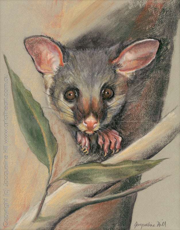 """Baby Possum"" by Jacqueline Hill, Limited Edition Fine Art Reproduction"