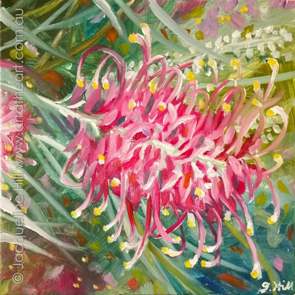 "DP354 ""Australia Pink"" (Grevillea IIIo) Original Oil on Panel Painting by Jacqueline Hill"