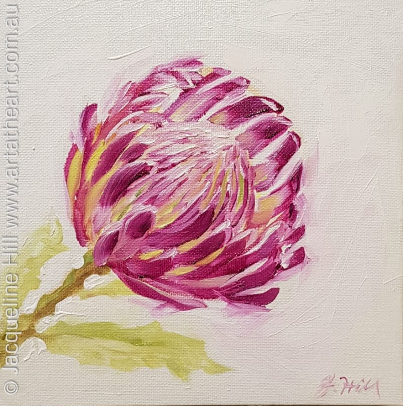 "DA261 ""Bloomin' Marvel"" (pink waratah) Original Oil Painting apx 8x8"" / 20cm sq by Jacqueline Hill"