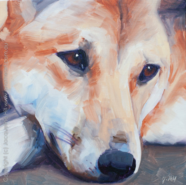 "DP020 ""Dingo"" Original Oil on Panel Painting by Jacqueline Hill"