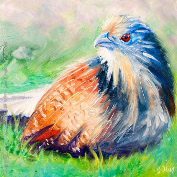 "DP063 ""Coucal Pheasant"" Original Oil on Panel Painting by Jacqueline Hill"