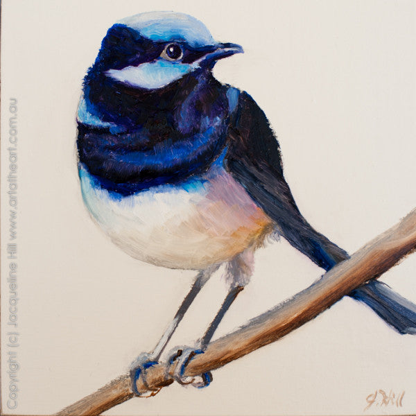 "DP190 ""Superb Fairy Wren"" Original Oil on Panel Painting by Jacqueline Hill"