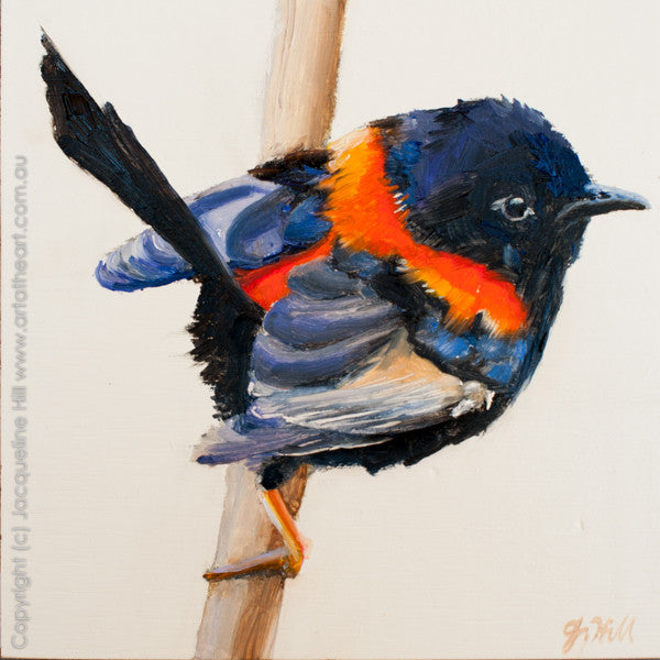 "DP191 ""Red-backed Fairy Wren III"" Original Oil on Panel Painting by Jacqueline Hill"