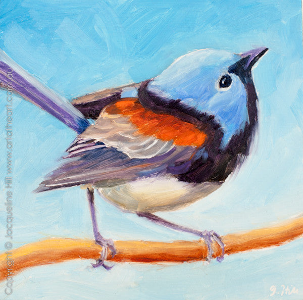 "DP198 ""Lovely Fairy Wren II"" Original Oil on Panel Painting by Jacqueline Hill"