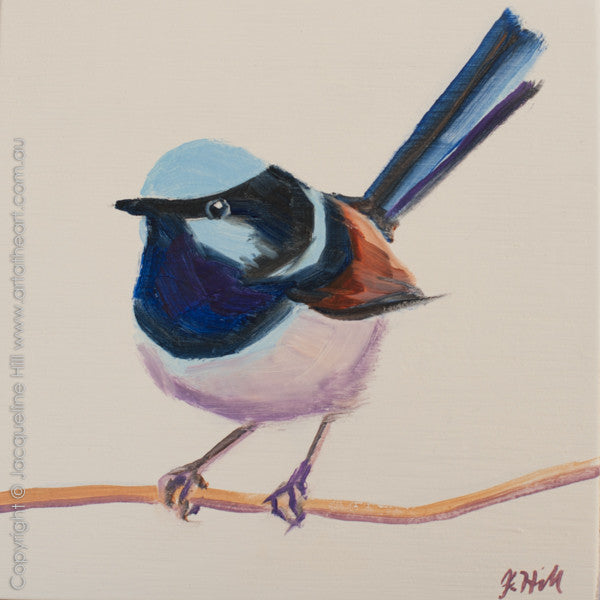 "DP291 ""Superb Fairy Wren III"" Original Oil on Panel Painting by Jacqueline Hill"