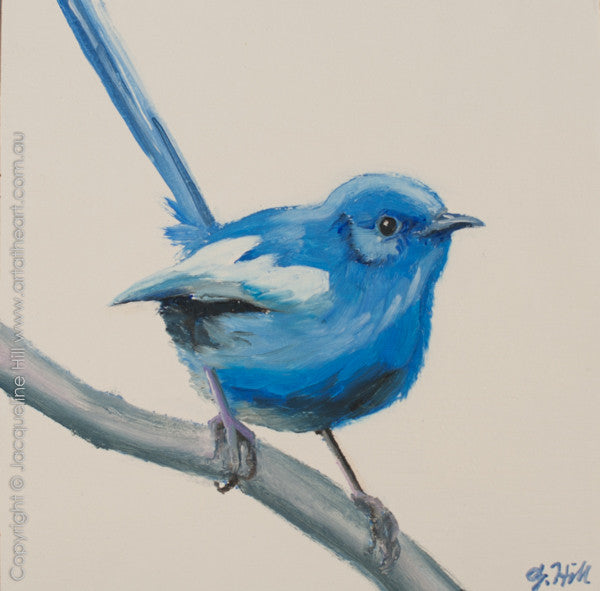 "DP237 ""White-winged Fairy Wren"" Original Oil on Panel Painting by Jacqueline Hill"