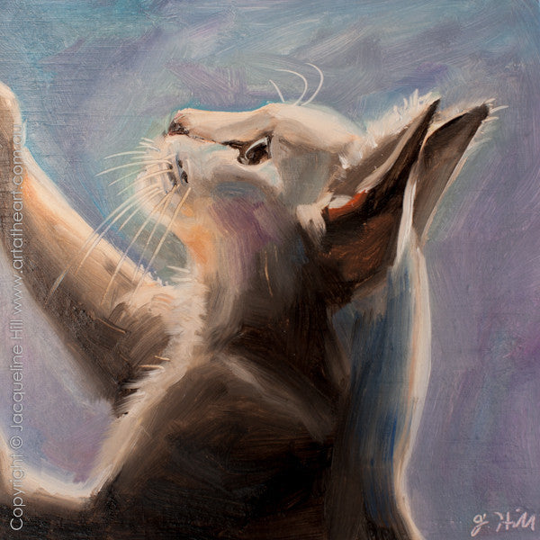 "DP230 ""Focus"" (Cat) Original Oil on Panel Painting by Jacqueline Hill"