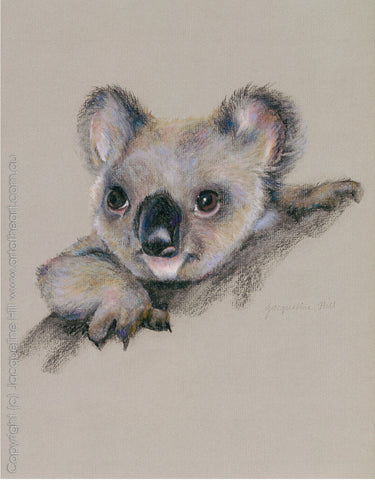 """Baby Koala"" by Jacqueline Hill, Limited Edition Fine Art Reproduction"