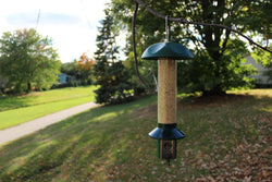 Bird Watching and Relaxation: How the PestOff Bird Feeder can bring peace to your life