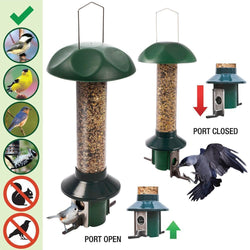 What Birds Will Benefit from Your Squirrel Proof Bird Feeder?