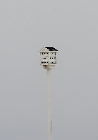 """Birdhouse"" Morning Fog"
