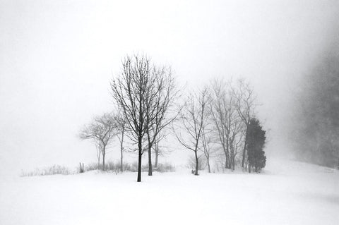 """Winter Fog No.1"""