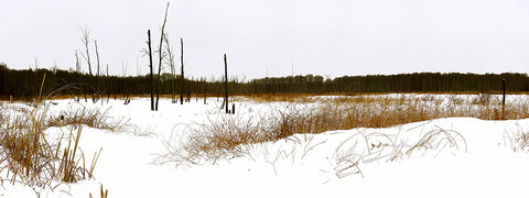 """Winter's Sweep""  Panorama 11""x30"""