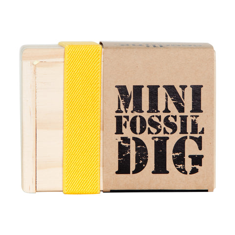Mini Fossil Dig Kit - activity-kits, assorted-styles, child, children, Children's Activity, clay, craft, crafting, create, dig, digging, eco-friendly, find, fossil, fun, game, gamesfun, hunt, kid, kids, kit, kits, learn, learning, Mini Fossil Dig Kit, rock, sand, Seedling, toys-games, treasure, wood, wooden