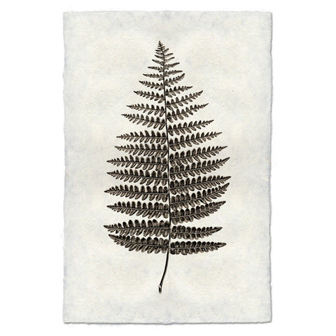 Roy Barloga Fern Print - american-made, art, artwork, assorted-styles, Boho Chic, botanical-prints, decor, fair-trade, photography, Roy Barloga