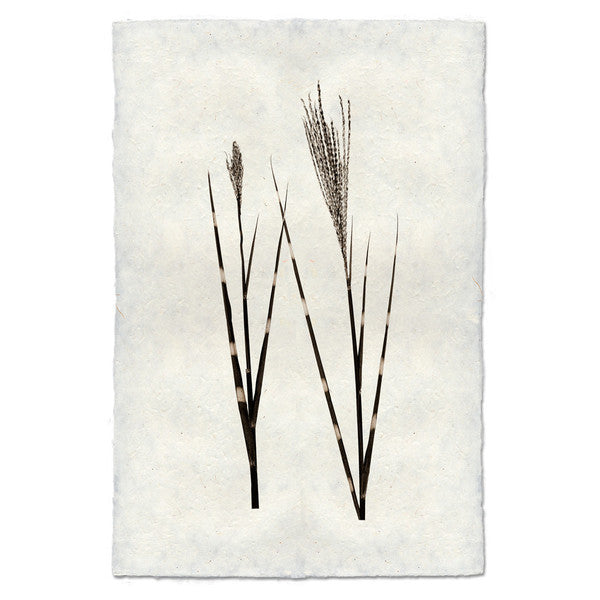 Roy Barloga Grass Print - Photography - Shop Nectar - 1