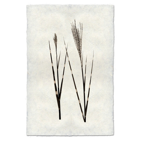 Roy Barloga Grass Print - american-made, art, artwork, assorted-styles, Boho Chic, botanical-prints, decor, fair-trade, photography, Roy Barloga