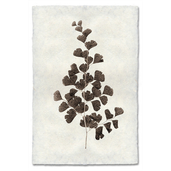 Roy Barloga Leaf Print Study 1 - american-made, art, artwork, assorted-styles, Boho Chic, botanical-prints, decor, fair-trade, photography, Roy Barloga