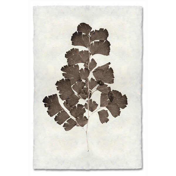 Roy Barloga Leaf Print Study 2 - american-made, art, artwork, assorted-styles, Boho Chic, botanical-prints, decor, fair-trade, photography, Roy Barloga