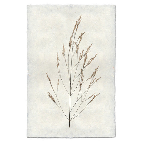 Roy Barloga Wheat Print - american-made, art, artwork, assorted-styles, Boho Chic, botanical-prints, decor, fair-trade, photography, Roy Barloga