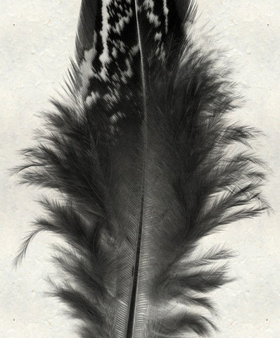 Roy Barloga Fluffy Feather Print Study 3 - american-made, art, assorted-styles, bohemian-chic, Boho Chic, decor, fair-trade, feathers, handmade, new-arrivals-in-decor, photography, Roy Barloga