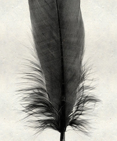 Roy Barloga Fine Feather Print Study 6 - american-made, art, assorted-styles, bohemian-chic, Boho Chic, decor, fair-trade, feathers, handmade, photography, Roy Barloga