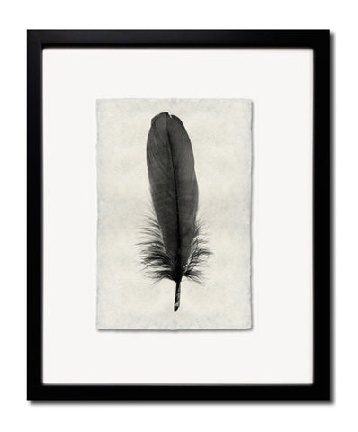 Roy Barloga Fine Feather Print Study 6 - Photography - Shop Nectar - 1