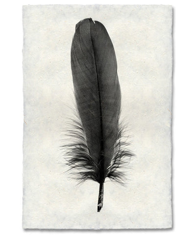 Roy Barloga Fine Feather Print Study 6 - Photography - Shop Nectar - 2