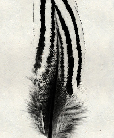 Roy Barloga Striped Feather Print Study 2 - american-made, art, assorted-styles, bohemian-chic, Boho Chic, decor, fair-trade, feathers, handmade, photography, Roy Barloga