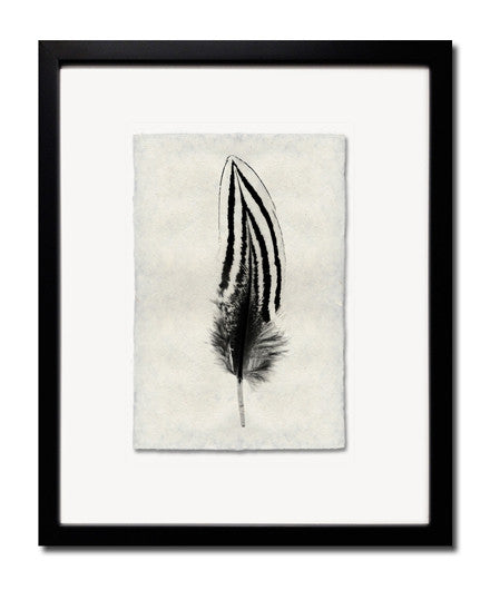 Roy Barloga Striped Feather Print Study 2 - Photography - Shop Nectar - 1